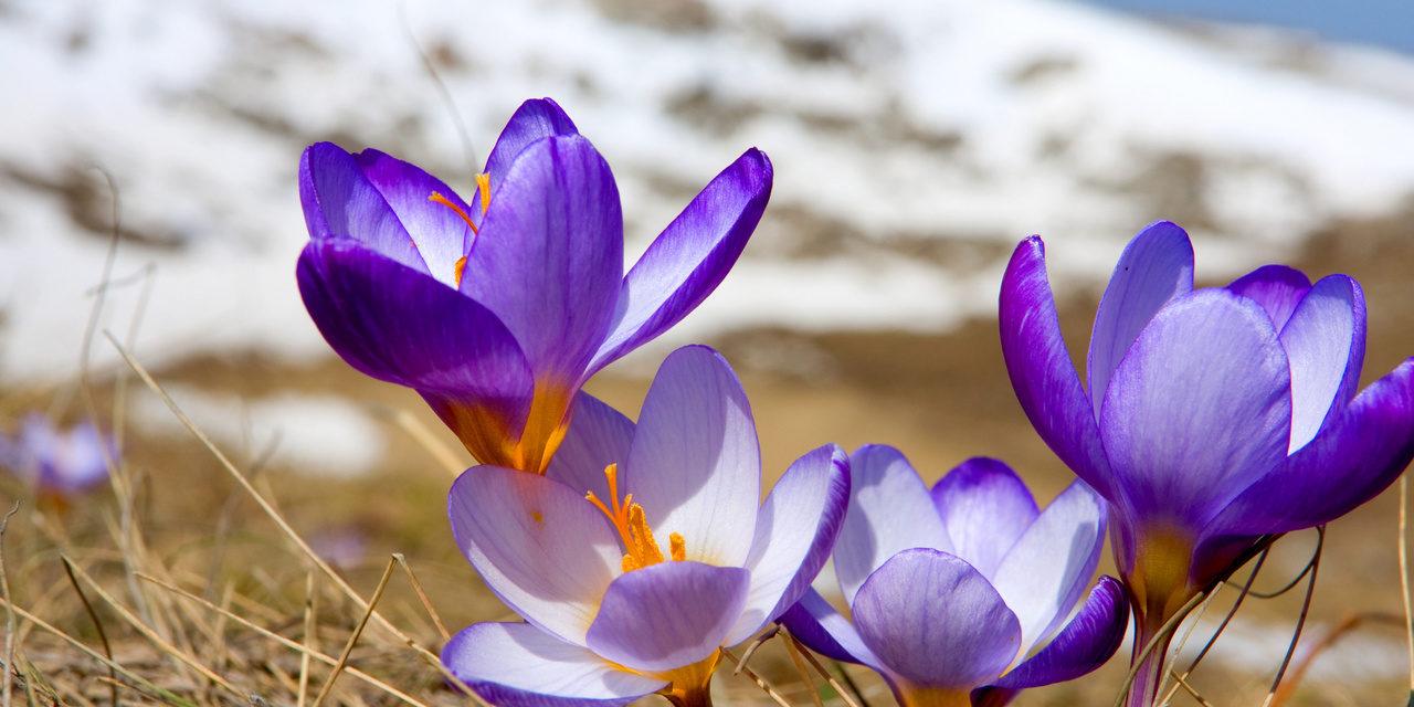 Всех женщин с праздником! Пусть в вашей душе всегда будет весна!!!